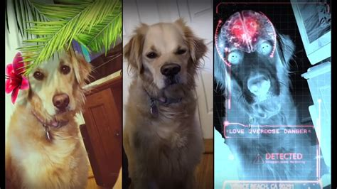 dog  snapchat filters part  youtube