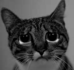 Sad cat face quotes lol rofl com