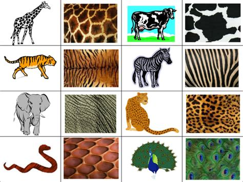 animal pattern games patterned skin patterns by choralsongster teaching