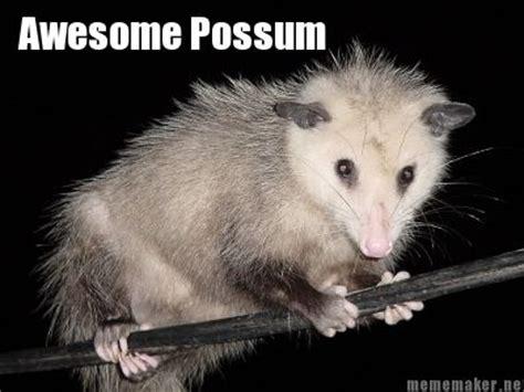 Possum Memes - mememaker net awesome possum everything else pinterest