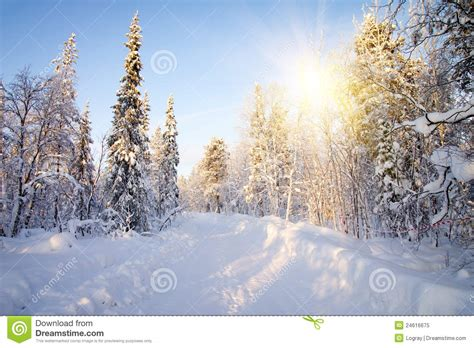 frosty forest royalty free stock winter in forest royalty free stock photo image