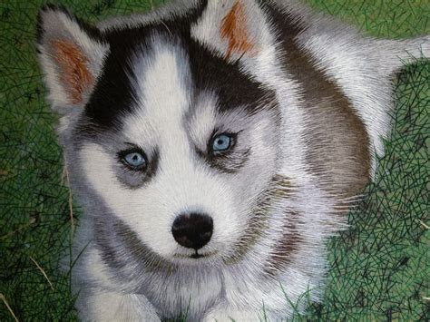 puppies husky husky puppy