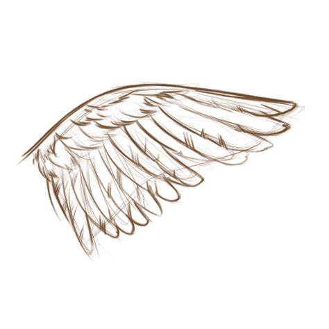 Simple Wing Outline by Search Results For Wings Outline Calendar 2015