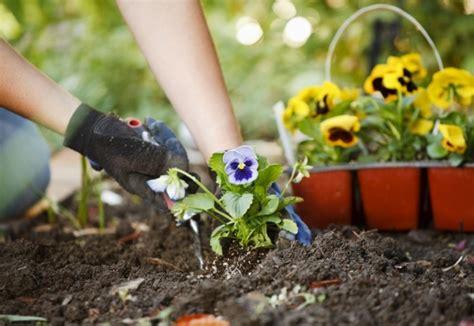 Pupuk Untuk Bunga Agar Cepat Berbunga cara membuat tanaman cepat berbunga