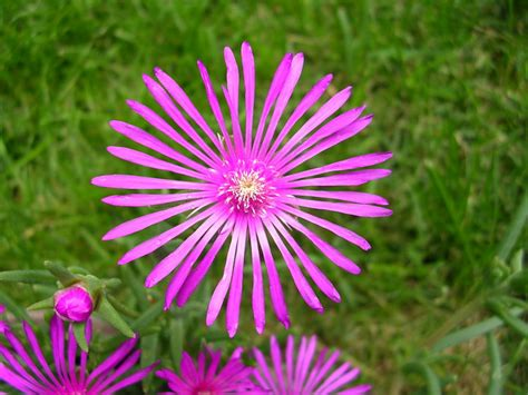nomi fiori di montagna macro di fiori di montagna foto immagini macro e
