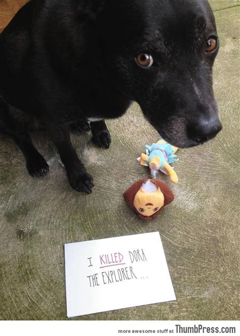 bad puppies dogs with notes the best of shaming 50 pictures