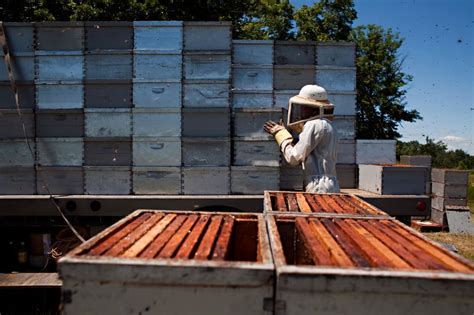 ann arbor backyard beekeepers beekeepers closely watch population productivity