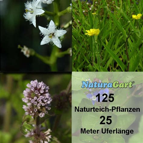 Produk Natur Shoo naturagart shop natur teichpflanzen 125 kaufen