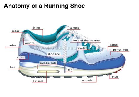 running shoe anatomy thunder road racing
