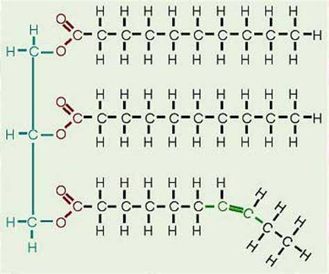 lipids diagram butter scienceandfooducla