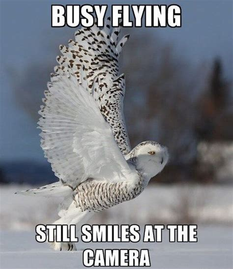 White Owl Meme - top 17 ideas about owl be loving you on pinterest