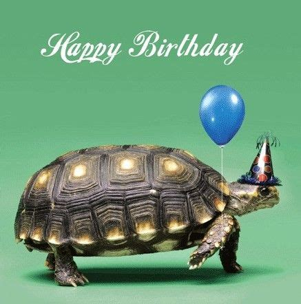 Turtle Birthday Card Birthday Card Turtle Google Zoeken Turtle Pinterest