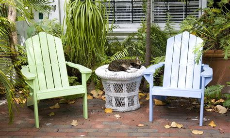 cat patio safe plants for cats what to have in your garden catster