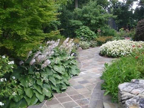 shady walkway plants outdoors pinterest