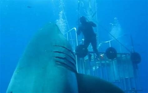 what is the largest great white shark ever recorded primer wordlesstech biggest great white shark ever filmed