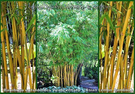 caring for bonie flooring asian lemon timber bamboo asian