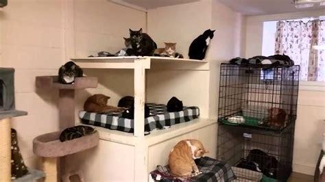 cat room the hudson valley spca free roaming cat room