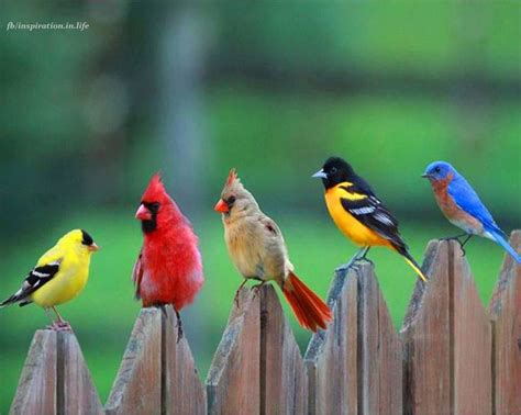 The Cardinal Detoxes by 17 Best Ideas About Pretty Birds On Birds