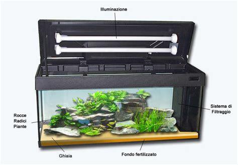 ghiaia acquario dolce il primo acquario guida per principianti