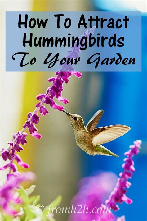 17 best ideas about attracting hummingbirds on pinterest
