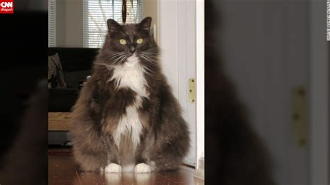 8 Health Problems That Cats Can Get by Obesity Epidemic Strikes U S Pets Cnn