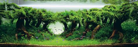 What Is Aquascaping by What Is Aquascaping Cape Contours