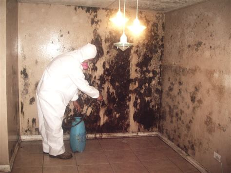 mold remediation chicago professional services