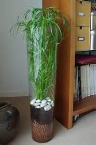 une plante verte facile 224 vivre mon billet d humeur en