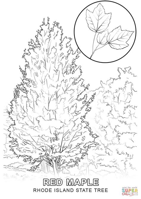 indiana state tree coloring page rhode island state tree coloring page free printable