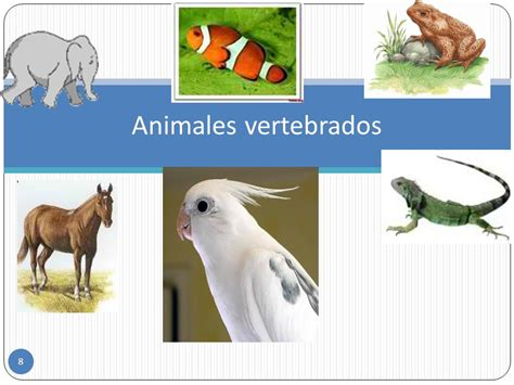 animales vertebrados ppt video online descargar animales vertebrados e invertebrados ppt descargar