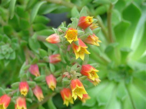 Les Plantes Succulentes by Guide Pour Conna 238 Tre Les Essentiels Sur Les Plantes