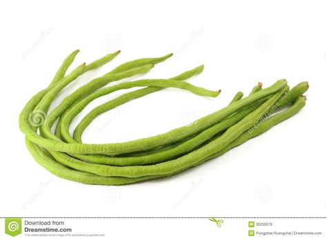 String Beans Clip - beans clipart bean pencil and in color beans