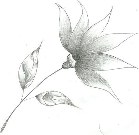 Easy Sketches Of by Flower Drawings Flower Sketch By Mubibuddy On