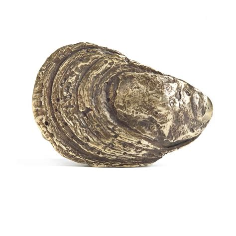 oyster shell mashburn oyster shell belt buckle sidmashburn com