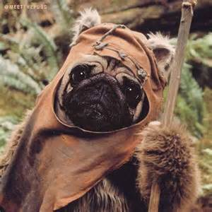 pug wars doug the pug gives costume advice east