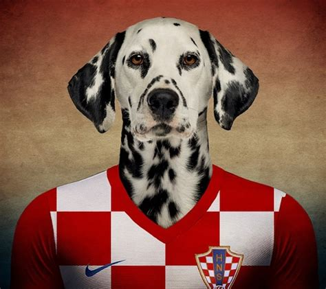 soccer for dogs usa soccer jersey for dogs marketing consultancy consultants strategist