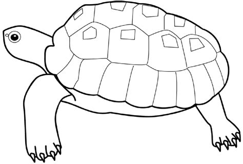 coloring pages you can print for free fish coloring pages coloring pages printable fish free