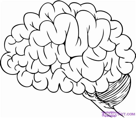 brain coloring page human brain coloring page coloring home