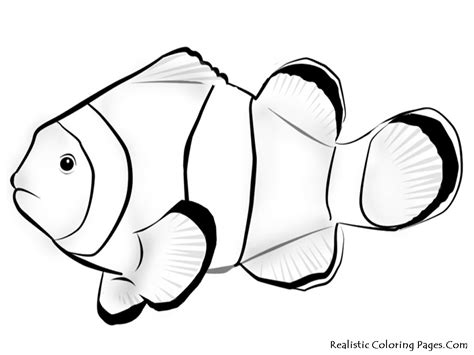 coloring pages of realistic fish image gallery nemo fish drawing