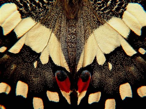 patterns in nature butterflies butterfly wings close up ago close up of wings of a