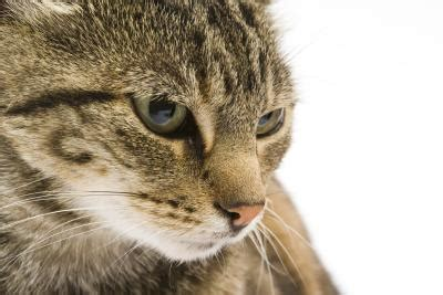 does certain cat food make cat smell worse pets