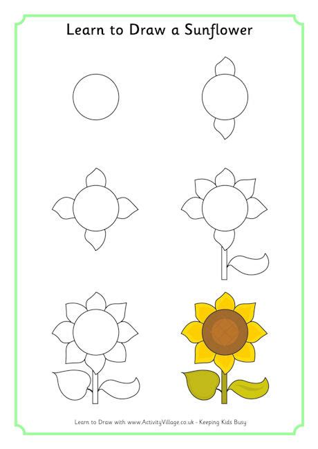 learn to draw learn to draw a sunflower