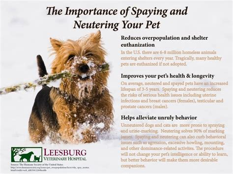 neutering a puppy when to spay a puppy optimal spay neuter age for puppies