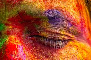 la colors powder holi the hindu festival of colour in india photo report