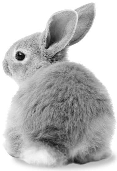 alimenti per conigli gli alimenti wellness per conigli e roditori padovan