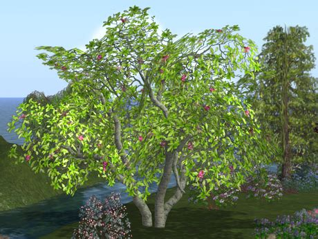 second life marketplace magnolia tree pack 3x four