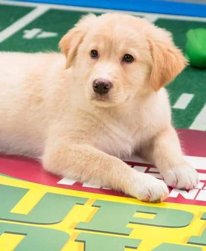 when does the puppy bowl start what time does the puppy bowl start 2018