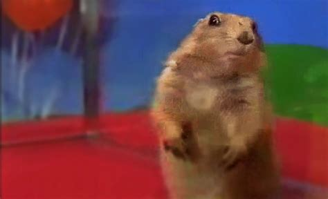 Dramatic Squirrel Meme - dramatic chipmunk 2 0 by maccasarotto on deviantart