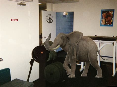 addressing the elephant in the room official website of