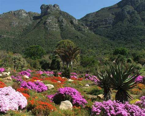 Pictures Of Kirstenbosch Botanical Gardens Cape Town I Giardini Botanici Di Kirstenbosch Viaggiamo